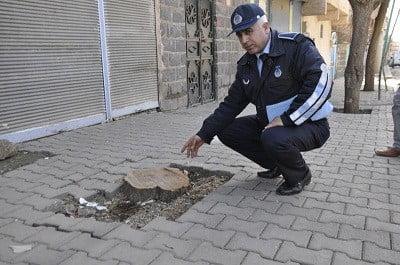 Bir ağaç kesen vatandaş yerine otuz fidan dikecek