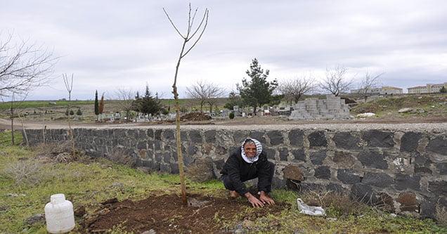 Kestiği Bir Ağaç İçin 30 Fidan Dikti