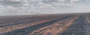 Yangın 500 Dönüm Ekili Alana Zarar Verdi