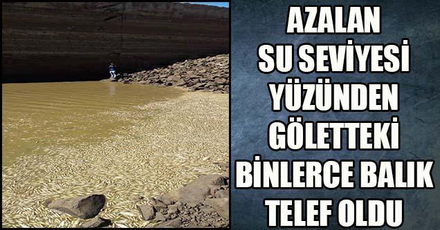 Su azalınca balıklar telef oldu