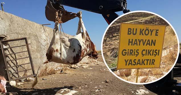 Kuduz nedeniyle köyde karantina uygulaması başlatıldı