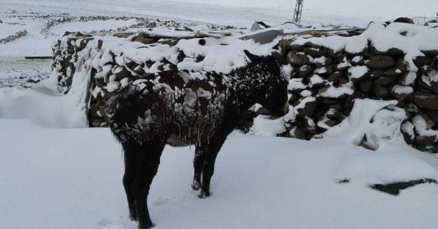 Dondurucu soğuk etkili oluyor!