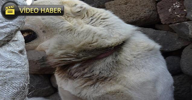 Boğazında ip sıkışan köpeği belediye ekipleri kurtardı