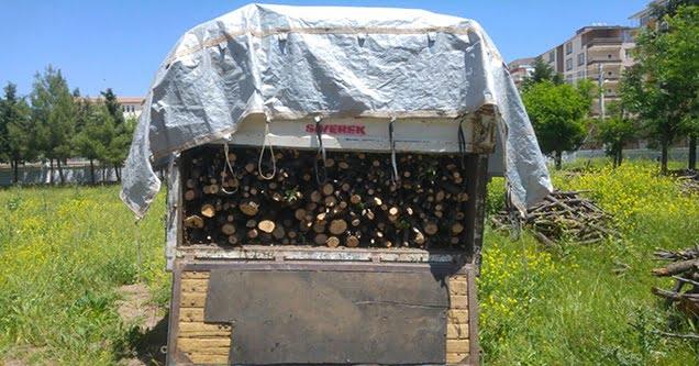 Kaçak odun kesenlere para cezası uygulandı