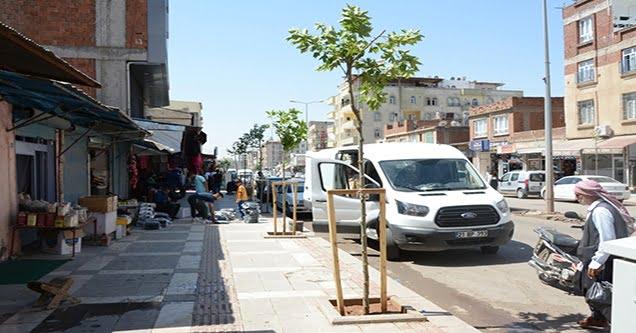 Siverek'te cadde ve bulvarlar ağaçlandırılıyor