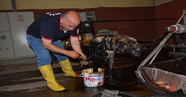 Petrol birikintisinde mahsur kalan köpek kurtarıldı