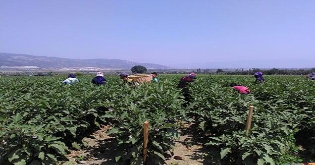 Mevsimlik İşçilerin Bir Günü