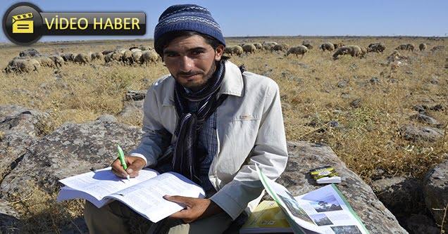 Çobanlık Yaparken Çalıştı, İlahiyat Fakültesini Kazandı