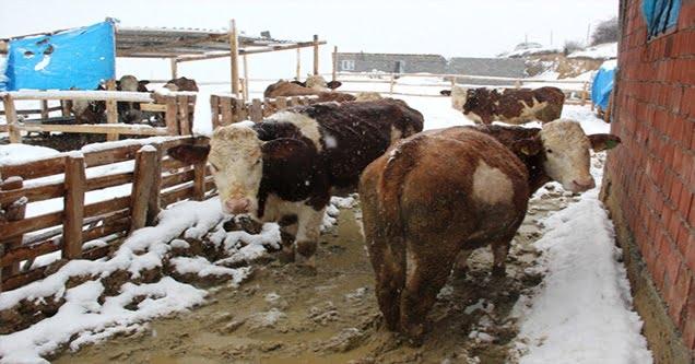 'Erzincan'dan çalınan hayvanlar Siverek'te bulundu' iddiası