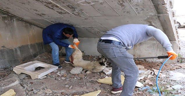 Yavrularıyla gezen köpeği av tüfeğiyle yaraladı