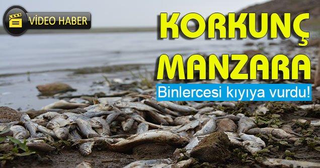 Hacı Hıdır göletinde toplu balık ölümleri endişelendiriyor
