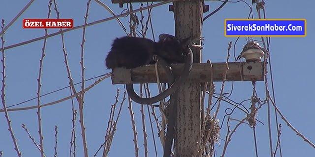 Kedi ve güvercin, itfaiye ekiplerince kurtarıldı