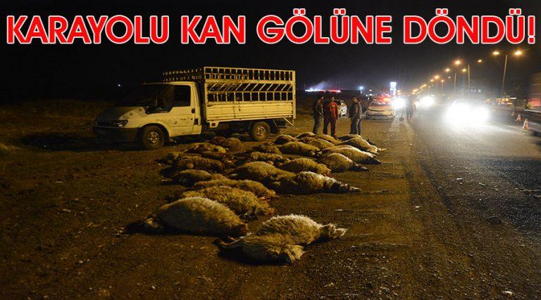 Otomobil çarptığı sürüde 40 koyun telef oldu