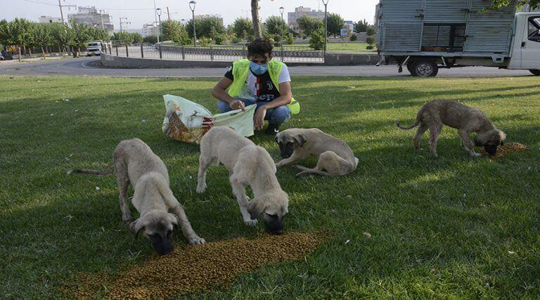 Koronavirüs sürecinde sokak hayvanları unutulmadı