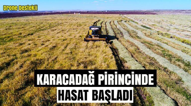 Karacadağ pirincinde hasat başladı
