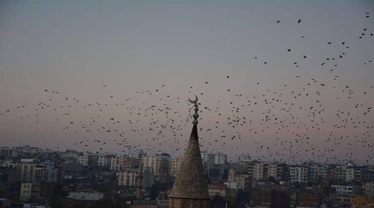 Sığırcık kuşlarının gökyüzündeki dansı kameralara yansıdı